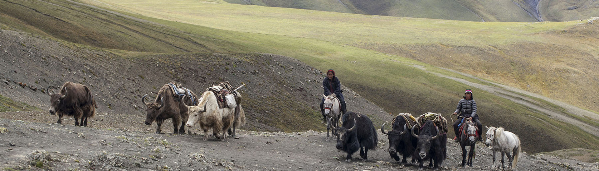 Yak Caravan Trek in Dolpo- (24 days)